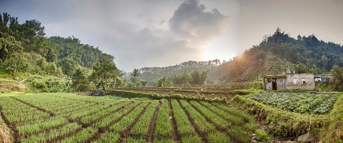 Kalibaru Java